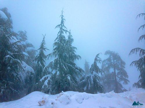 chréa neige snow mountain blida atlas blidéen algérie altitude ski nuage tempete storm brouillard fog route enneigée الأطلس البليدي الجزائر البليدة شريعة ثلج جبال