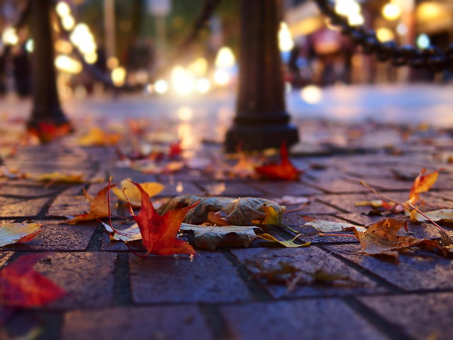 Fallen leaves at Gastown
