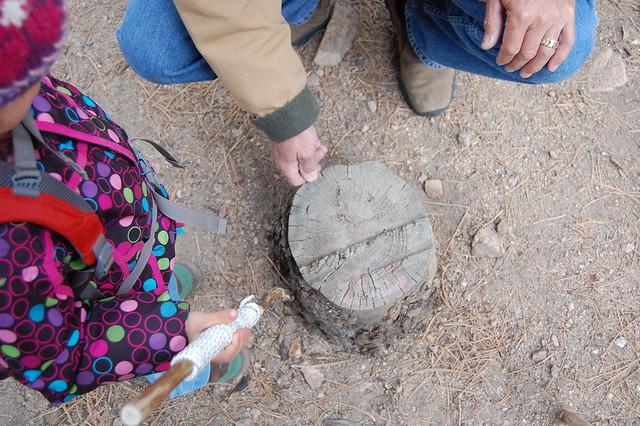 Tree-ring dating - Hiking at Tenderfoot Loop Trail, Boulder, CO