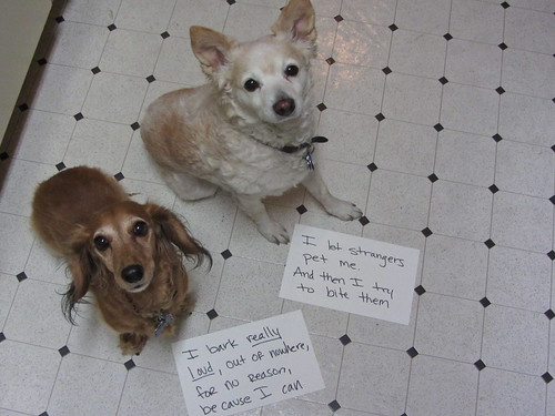 Shameful Dogs