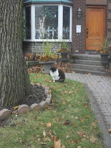 Cat, guarding its domain