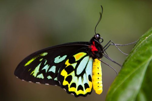 black-yellow-butterfly