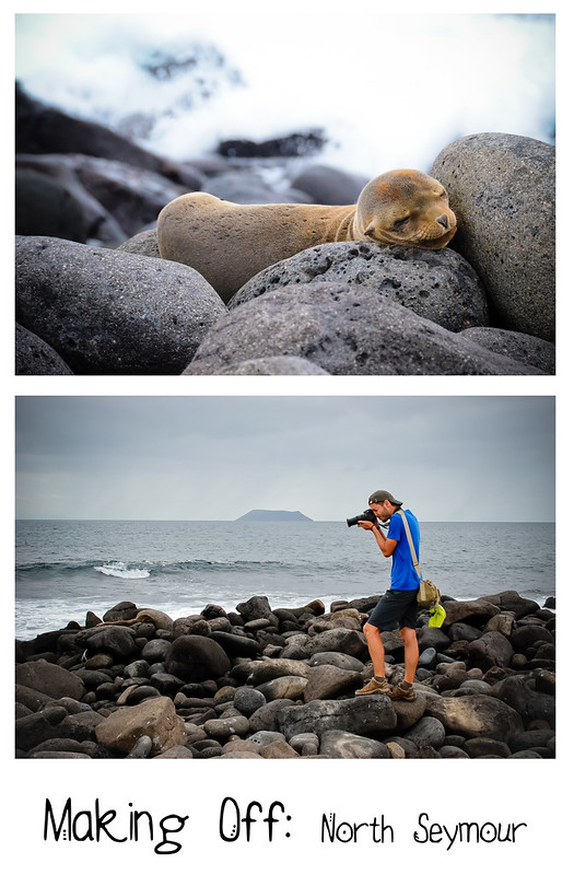Galapagos - North Seymour Island - makingoff3