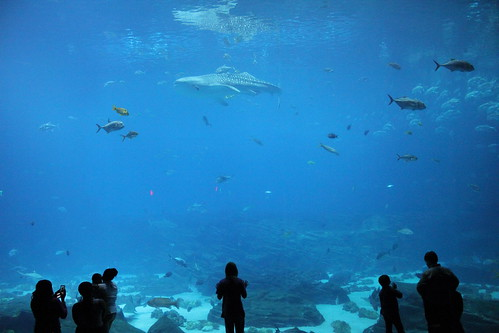 World's Largest Aquarium Tank