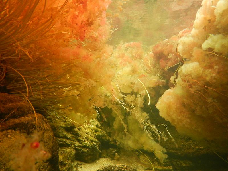 Caño Cristales - Bajo el agua 4