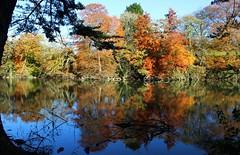 Autumn reflections at Radford Lake