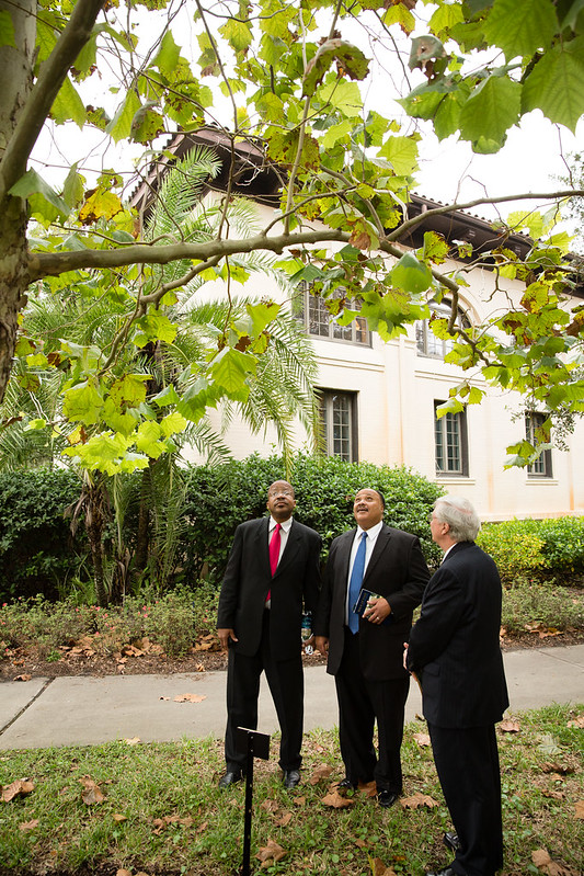 MLK III views tree at Rollins that is a direct descendant from a Sycamore at his father's Chapel in Selma, Alabama