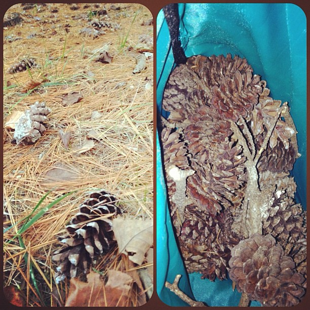Day 18 of #novemberthankful Today I am thankful for a hubby who suggested we collect pine cones for a winter wreath I want to make!