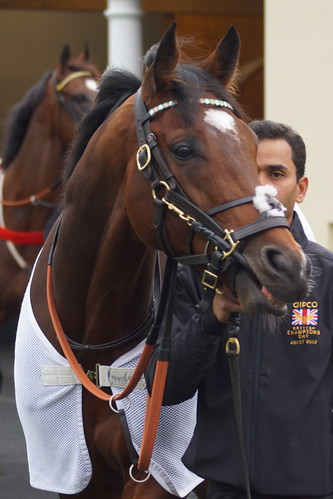 The three best racehorses in the world - Frankel (rated 140) by CharlesFred