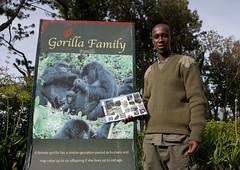 Gorilla guide in Volcanoes National Park, RwandaU PARC NATIONAL DES VOLCANS - RWANDA