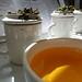 Kangra tea tasting