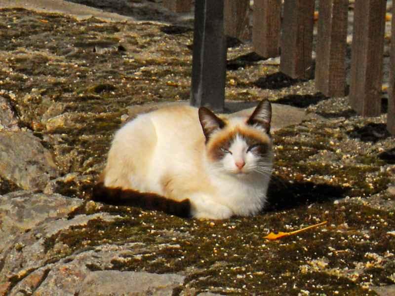 jardineros en acci n trucos para ahuyentar a los gatos
