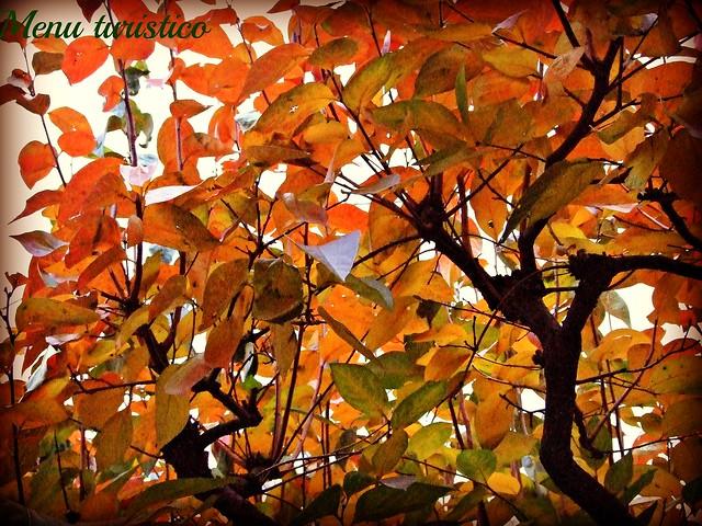 albero autunno