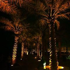 Night walk Palms of Light
