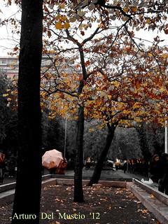 al sole del tuo cuore la pioggia è una carezza