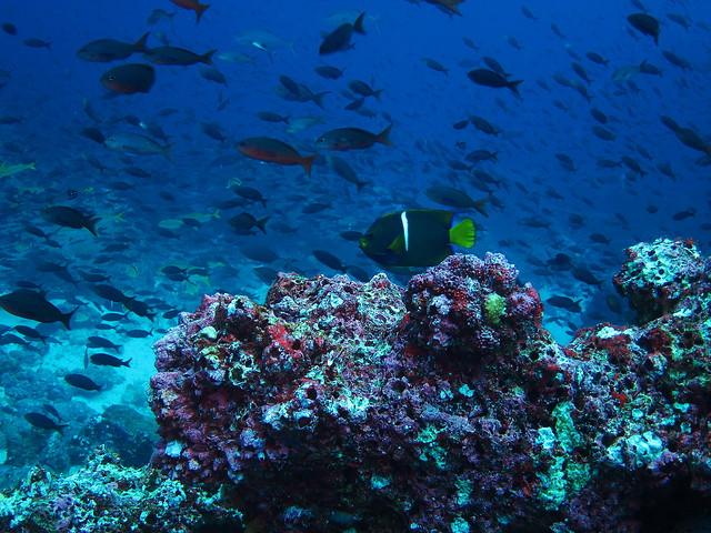Fauna bajo isla de Darwin