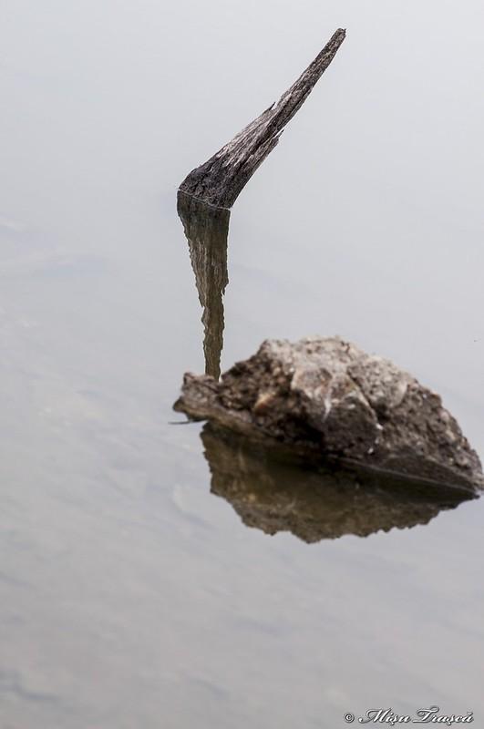 aripă la piatră