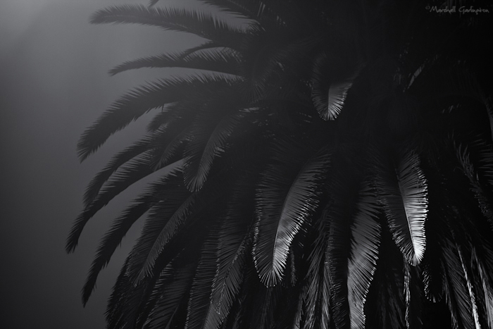 Foggy Palm 2