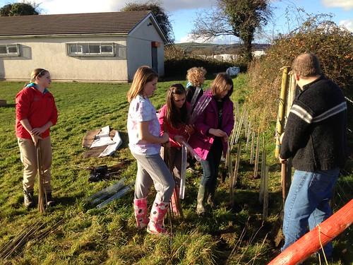 photo tree planting