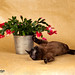 Coco with Christmas Cactus