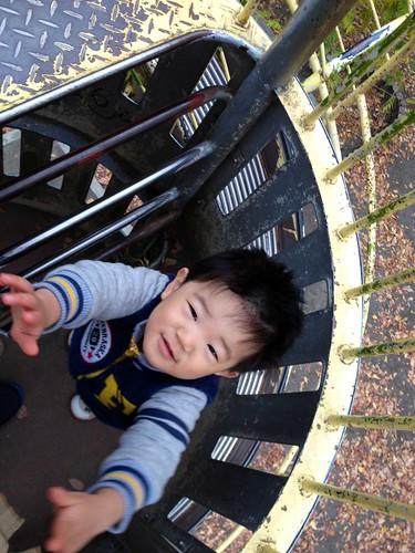 抱っこをせがむとらちゃん (2012/11/28)