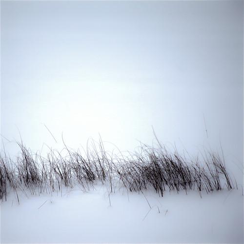Reflet du soleil du nord sur neige... l'herbe frissonne... j'ai froid...!!!