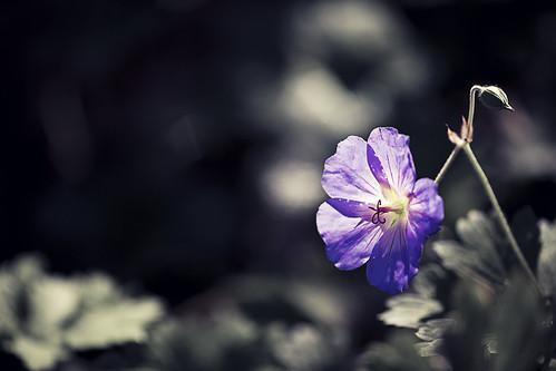 light plant flower green contrast garden georgia purple clayton harris gibbsgarden