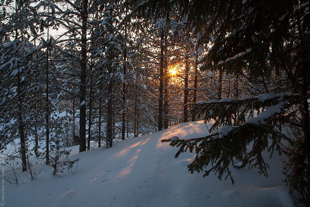 Масельга. Рассвет в лесу