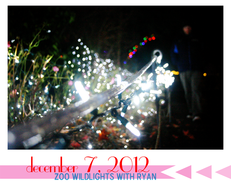 {december daily | day 7} wildlights at the zoo