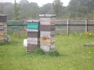 Beehives in Devon