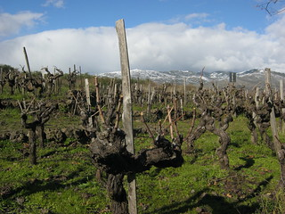 Pre-pruning at Porcaria