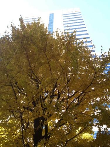 新宿西口のイチョウ並木