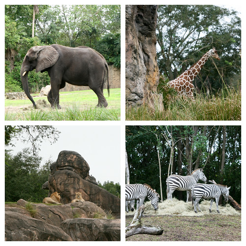 Safari 2 Collage