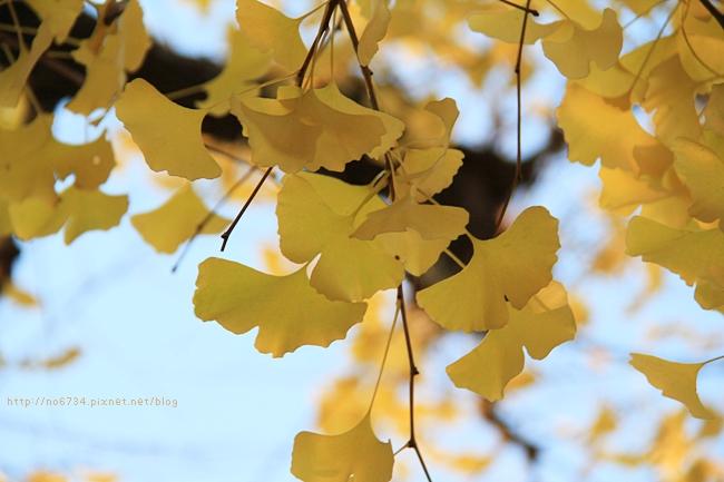 20121206_XmasTokyo_1317 f