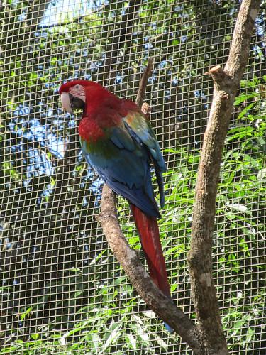 Le Parc des Oiseaux d'Iguaçu: la grande volière aux perroquets