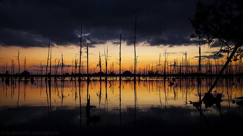 canon bayou madisonville ef24105mmf4lisusm 5dmarkii gusteisland tyalexanderphotography