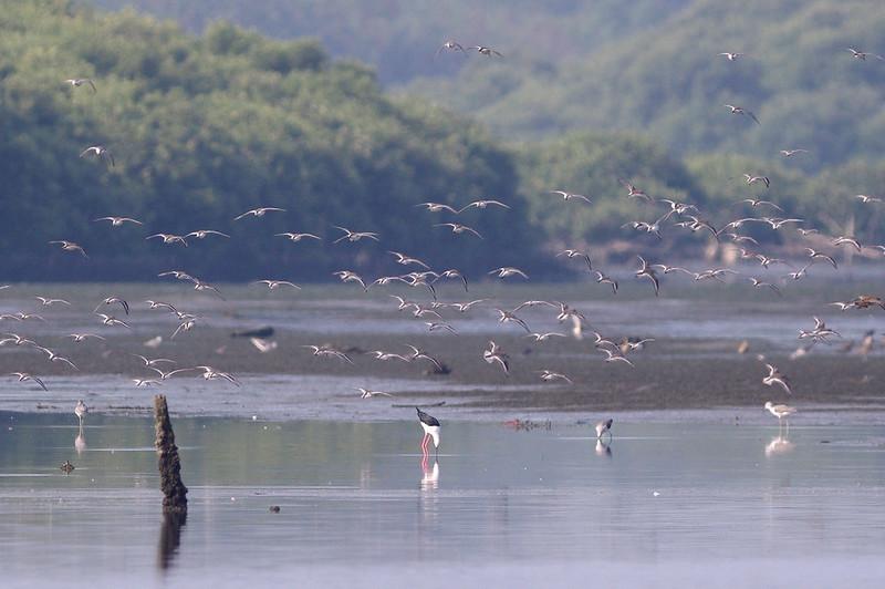 台南 - 台江沿岸生態記錄