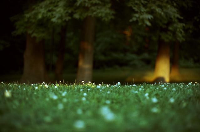 Untitled, Nikon FE2