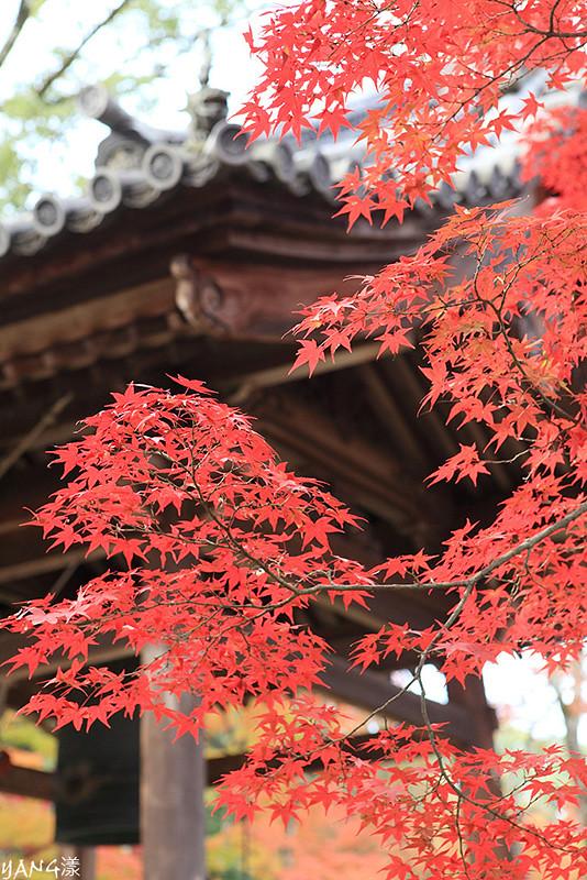 京都紅葉回憶