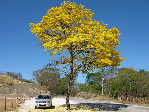flora costarica guanacaste planthunting