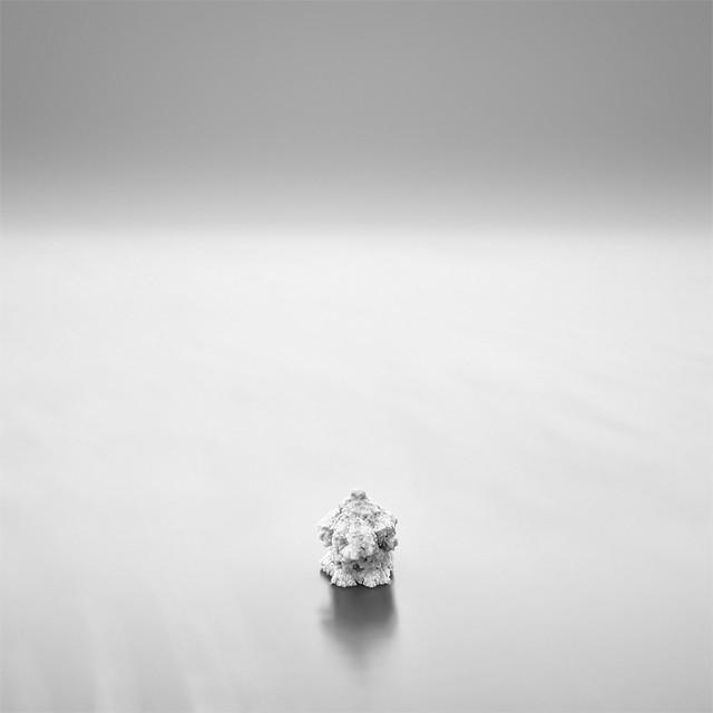 Mushroom of Salt