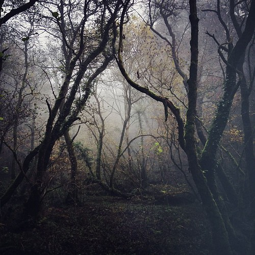 #Woodland walk in the #fog