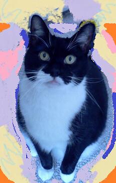 stare-kitty