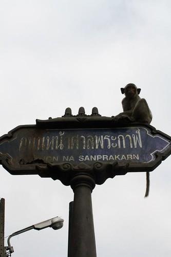 Monkey Street Sign