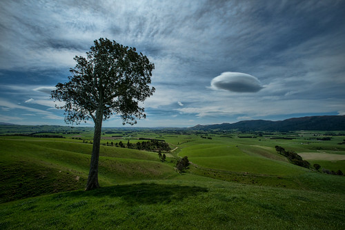cloud west tree nz otago tapanui