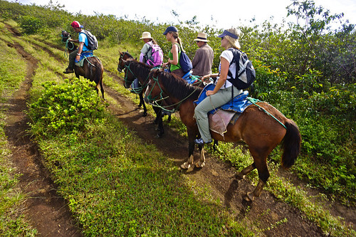 Horsback Ride, Galapagos
