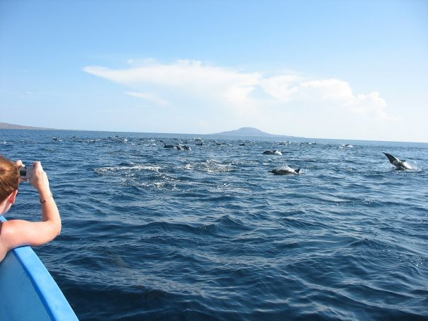 During our 2008 company retreat in Loreto, Mexico, we were treated to a surprise dolphin school, who swam with our boat to our snorkel site