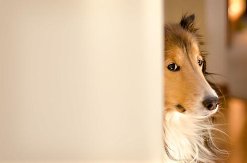 11/12: Peekaboo Fergus by Kerfuffle~
