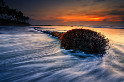 longexposure sea bali motion tree beach water sunrise indonesia dead nikon coconut tripod ss hard wave tokina 09 lee nd bluehour goldenhour pantai graduated neutraldensity 1116mm manyar d7000