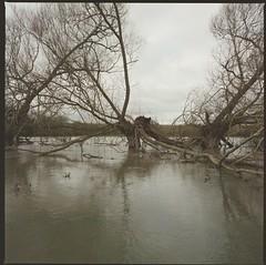 River Thame in flood